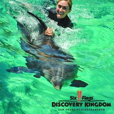 LIMITED TIME OFFER: Save BIG ($30 off!) when you book your Dolphin Discovery experience by Feb. 28 and swim by March 15, 2013: Only $99.99! Use promo code: PINSWIM   Click on photo to learn more about #DolphinDiscovery #SixFlagsDiscoveryKingdom #SwimWithDolphins #dolphins #bucketlist