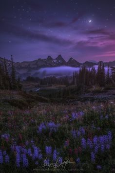 Night Watch by Ryan Dyar*
