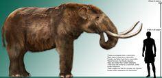 Pleistocene American Mastodon