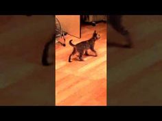 The funniest and most hilarious ANIMAL videos 2016 - Funny animal compil. 2016 Funny, Funny Animals, Hilarious, In This Moment, Mj, Cats, Friends, Videos, Amigos