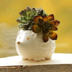 Ceramic hedgehog planter with gold details. Perfect for succulents! #plumandpunch