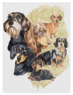 Barbara Keith 'Dachshund' Canvas Art (24 in. W x 32 in. H), Brown
