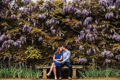 Yesterday morning I got to photograph these two! Our session was perfectly timed with the #wisteria @loseley_park