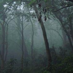 Virunga National Park Parc National, National Parks, Lake Tanganyika, African Jungle, Forest Mountain, Congo Kinshasa, East Africa, Republic Of The Congo, World Heritage Sites