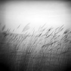 Adrift and at Peace  A double exposure Holga photo that I shot in the spring:
