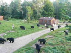 North American Bear Sanctuary in Ely, MN