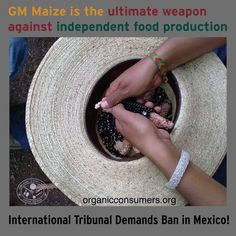 """""""The ultimate weapons against independent food production are genetically modified crops and the corporations that control them."""" Read what Mexico is doing to protect native corn: http://orgcns.org/1z1iB0I"""