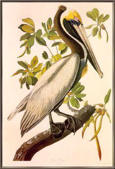 John James Audubon Painting