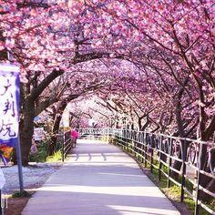 【rie.0101】さんのInstagramをピンしています。 《. 桜のトンネルの向こうで 出逢えることを 信じてる . . . 夜中に東京を出発。 夜明け前に到着。 おかげで、人がいない時を取れました。 (おばちゃんのお尻写ってるけど笑) 春は、もうすぐそこまで。 . . . #静岡県#河津桜 #桜#河津桜まつり #朝のお散歩 #デジ一#一眼レフ#写真#カメラ女子#EOS70D#EOSkiss#Canon#EOSkissx50#デジイチ#ファインダー越しの私の世界#写真部#tokyocameraclub#写真好きな人#レンズの向こう側#私の見る世界#写真部 #pct_japan#japan_view#love_japan#japan#bestjapanpics#team_jp_#YOLO#IGersJP》