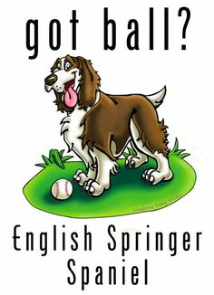 This is so our springer, Stella!