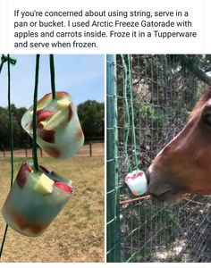 Horse popsicle. Gatorade, apples and carrots frozen on a string to hang up to help your horse cool off in the summer heat.