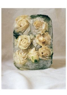 — Frozen Flowers, Still Life 2nd Year Photography...