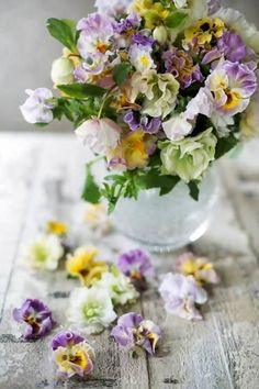 I love Pansies! Especially these new-fangled varieties with the frilly edges are so pretty.
