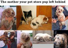 Puppy Mill Moms