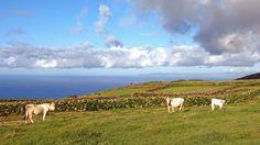 Azoren Reisen - Wandern und Erholen im Triangulo Mountains, Nature, Travel, Animals, Recovery, Hiking, Voyage, Animales, Animaux