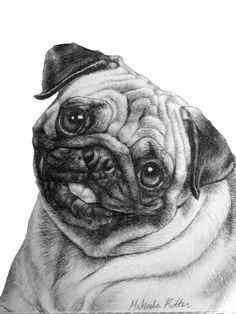 pencil drawings of pugs | nikkiburr - Dans Birthday Pug by ~nikkiburr on deviantART