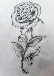 Resultado de imagem para long stem rose sketch