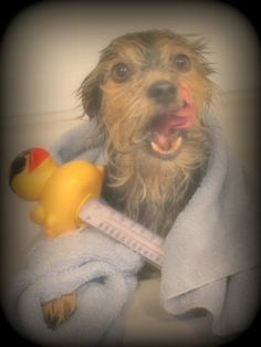 I have my rubber ducky!!
