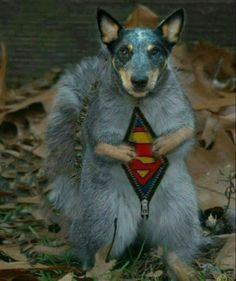 Happy Halloween from Rocket / the animal actor