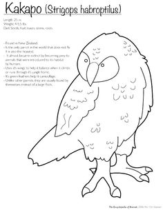 New Zealand Coloring Pages Extinct Animals Camouflage Page By Animal