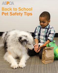 701cc1dd5edf25 Are Your Kids Heading Back to School  Read our Pet Safety Tips