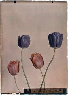 wol hide — anothermag:   These 1920s botanical photographs...