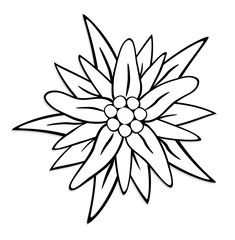 Edelweiss Tattoo, German Decor, Adult Coloring Book Pages, Flower Clipart, Silhouette Cameo Projects, Stained Glass Patterns, Rock Crafts, Floral Illustrations, Colorful Drawings