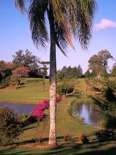 azaleas view
