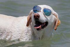 Home inn at the beach venice fl pinterest venice florida 9 dog friendly beaches in florida solutioingenieria Gallery