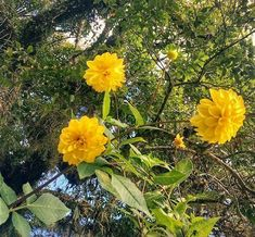 Flowers  #flower #instaphotography #nature #yellow #flowers #photography Reposted Via @domena_