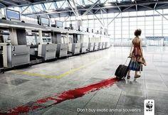 """""""Não compre lembranças de animais exóticos"""" - WWF  www.eCycle.com.br Sua pegada mais leve."""