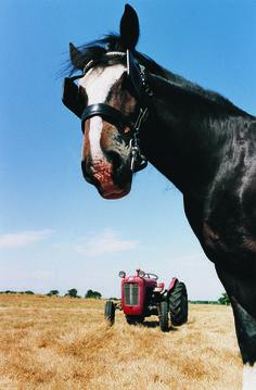 Rijstzemelen zijn nog erg onbekend als onderdeel van het rantsoen. Dat is jammer, want paarden die duurprestaties moeten leveren of mager zijn kunnen er veel voordeel bij hebben. Daarbij zijn rijstzemelen beter verteerbaar dan graan en bevat het relatief weinig koolhydraten als energiebron.