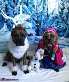 Baha hilarious dog costume ideas for Halloween. Cute Dog Costumes, Puppy Costume, Pet Halloween Costumes, Animal Costumes, Dog Halloween, Disney Dog Costume, Sven Costume, Frozen Halloween, Funny Animal Pictures