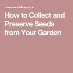 How to Collect and Preserve Seeds from Your Garden