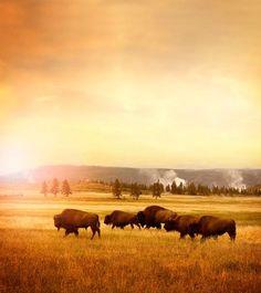 Montana to Yellowstone National Park, Wyoming
