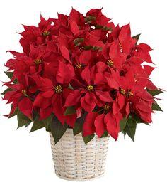 """10"""" #Poinsettia Basket #Christmas"""