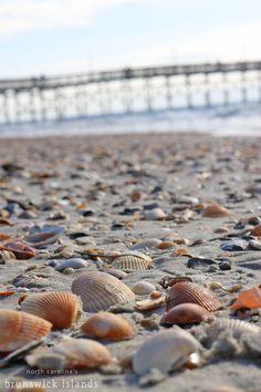 Say shello to shelling in the Brunswick Islands! Fort Bragg North Carolina, Oak Island North Carolina, Visit North Carolina, Coastal North Carolina, North Carolina Beaches, Ocean Isle Beach Nc, Sunset Beach, Seashells, Starfish