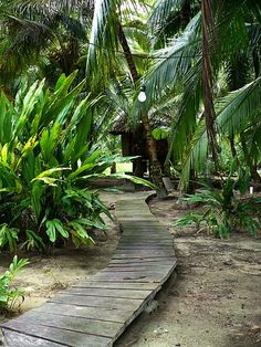 Tropical pathway - much better than gravel which is so hard to walk on.