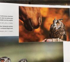Owl, Bird, Animals, Griffins, Animales, Animaux, Owls, Birds, Animal