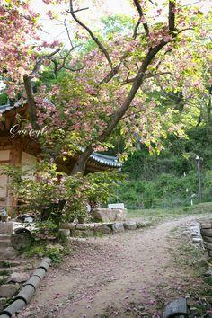 서산 개심사 왕벚꽃 5월엔 충남 꽃구경 떠나요!안녕하세요 5월의 꿀연휴 즐겁게 보내고 있으신가요 4월말엔...