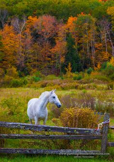 Horse photography - Autumn in the country. -  title Graze the Fence