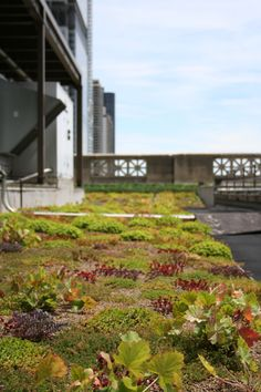 Chicago Cultural Center green roof