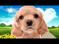 Happy birthday songs funny youtube celebrations pinterest cute dog sings happy birthday youtube m4hsunfo