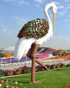 Naturaleza increíble trabajo hecho por milagro Jardín - Dubai