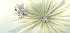 Van Cleef & Arpels Frivole creations in white gold and diamonds from the #DiamondBreeze selection are distinguished by their airy petals #HolidaySeason