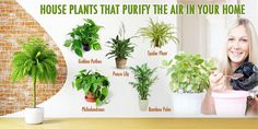 12 Houseplants That Clean The Air And Are Almost Impossible To Kill - Everything for Your Garden Airplane Plant, Chlorophytum, Tiny White Flowers, Green Tips, Peace Lily, House Plants Decor, Spider Plants, Bedroom Plants, Flowering Shrubs