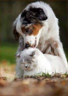 Ungewöhnliche Freundschaften - Hund und Katze