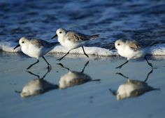 Animal Tracks: Oct. 31 - Nov. 7- slideshow - slide - 5 - NBCNews.com