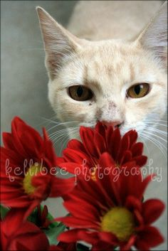 stop and smell the flowers  cat photo 5X7 print  by oceanwithin, $7.00