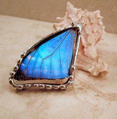 blue Morpho zephyritis by Debras Divine Designs